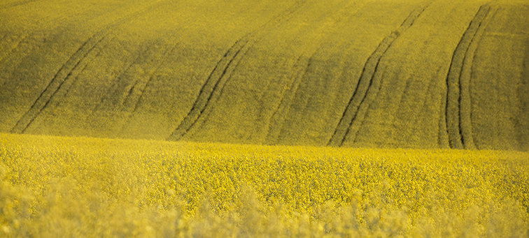 Proposed prioritisation of rapeseed oil nutritional traits
